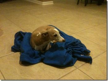 dogs snuggi (4)